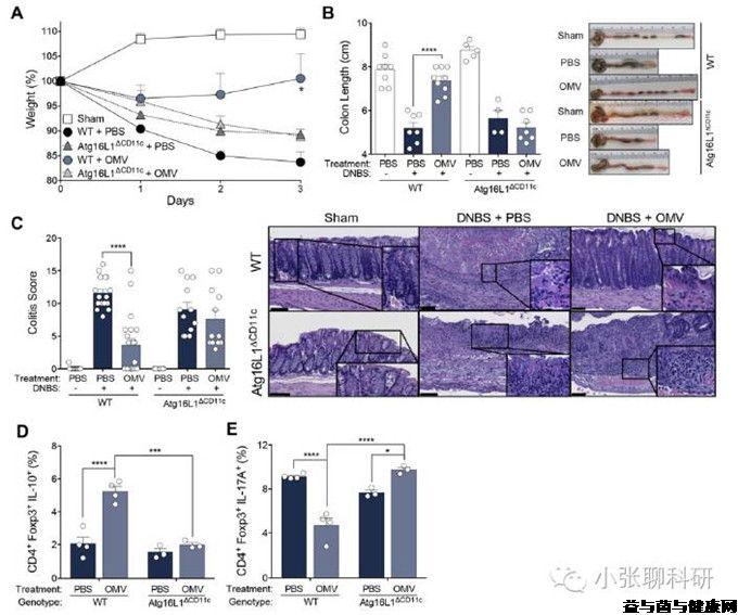 S5E05: 来篇Science提提神,从免疫角度看宿主基因-肠道微生物作用