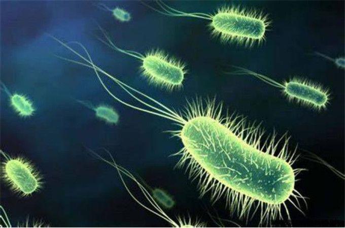 导致细菌性腹泻的主要细菌是什么?