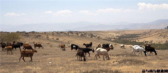 骆驼奶团购网为您提供:远离炎症您应与什么类食物亲近