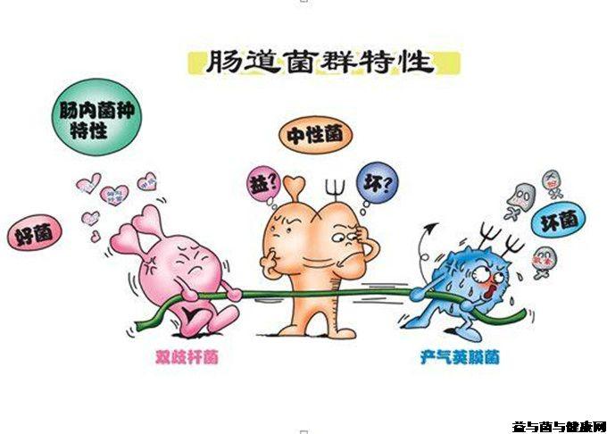 骆驼奶团购网为您提供:人类肠道菌群有多少?